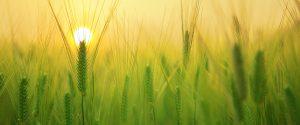 software development agriculture