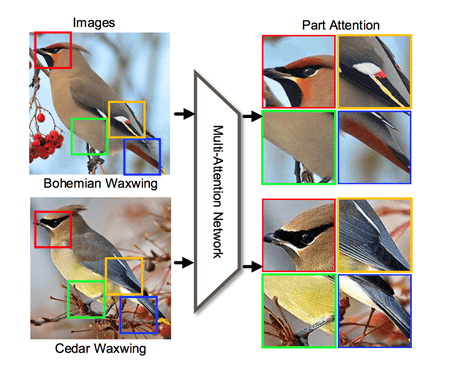 Attention models: Neural Network for Fine-Grained Image Recognition